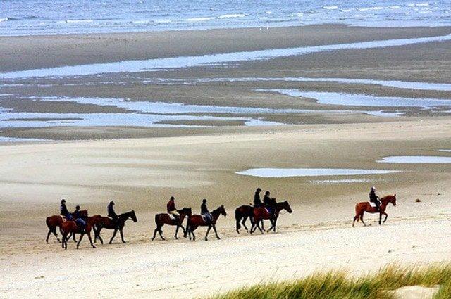 Horses Le Touquet