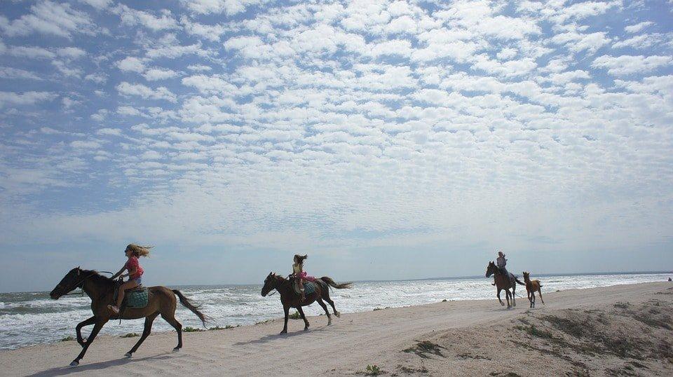 Horses Beach Le Touquet
