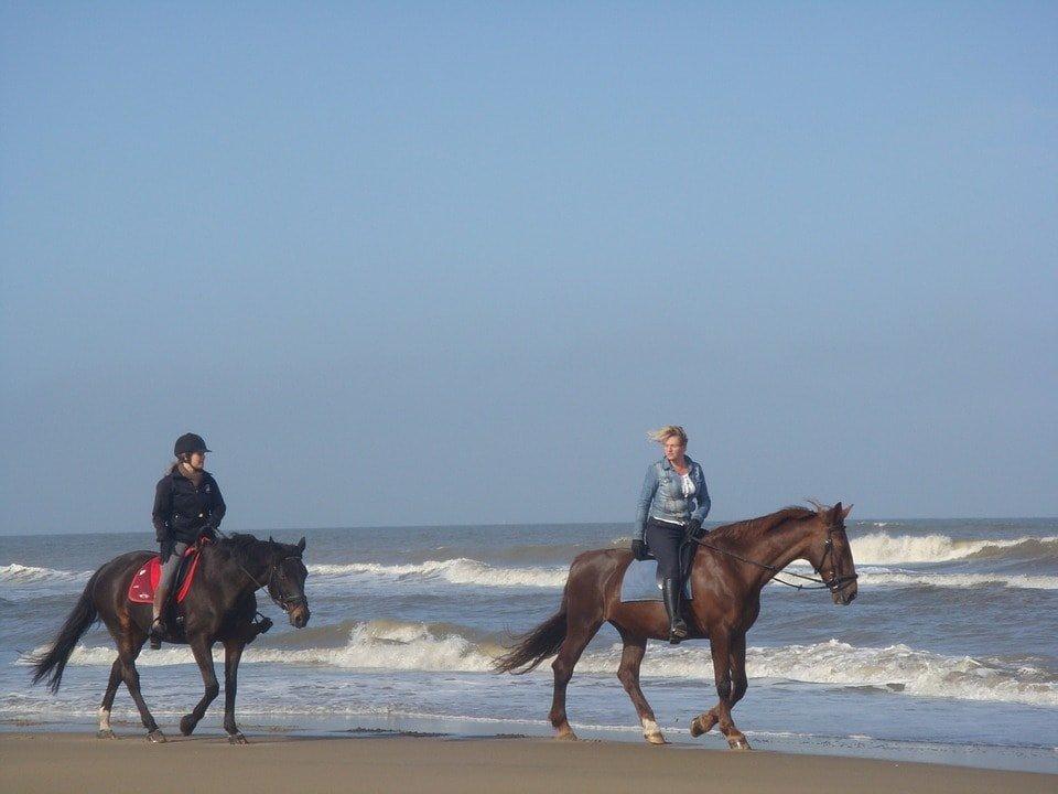 Horses Beach
