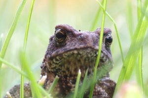 Toad_LeTouquet