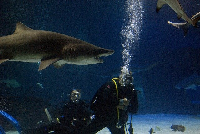 Sharks Nausicaa